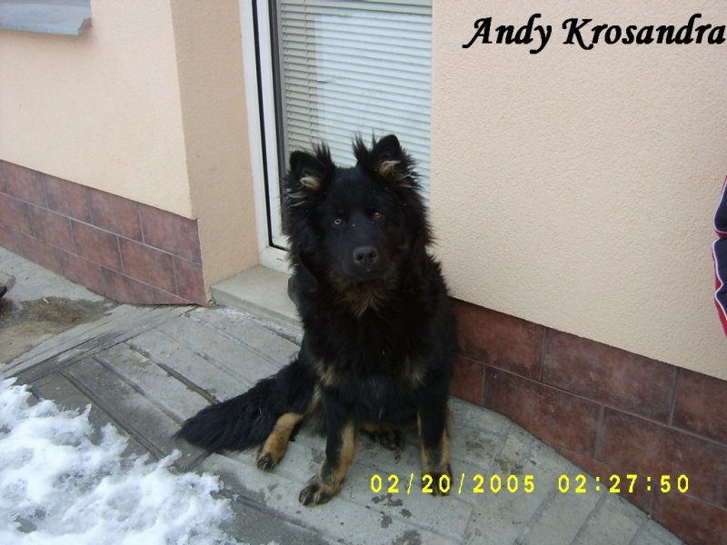 Stréček Andy Krosandra